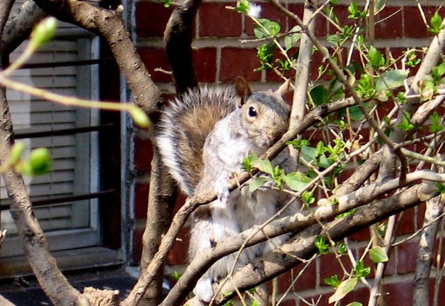 kalt-berechnender-squirrel.jpg