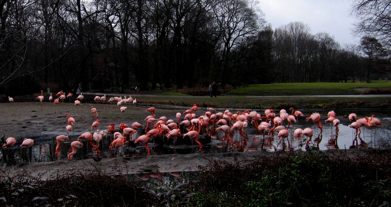 kuba-flamingos.jpg