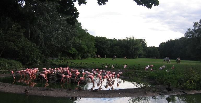 flamingos enten kamele.jpg